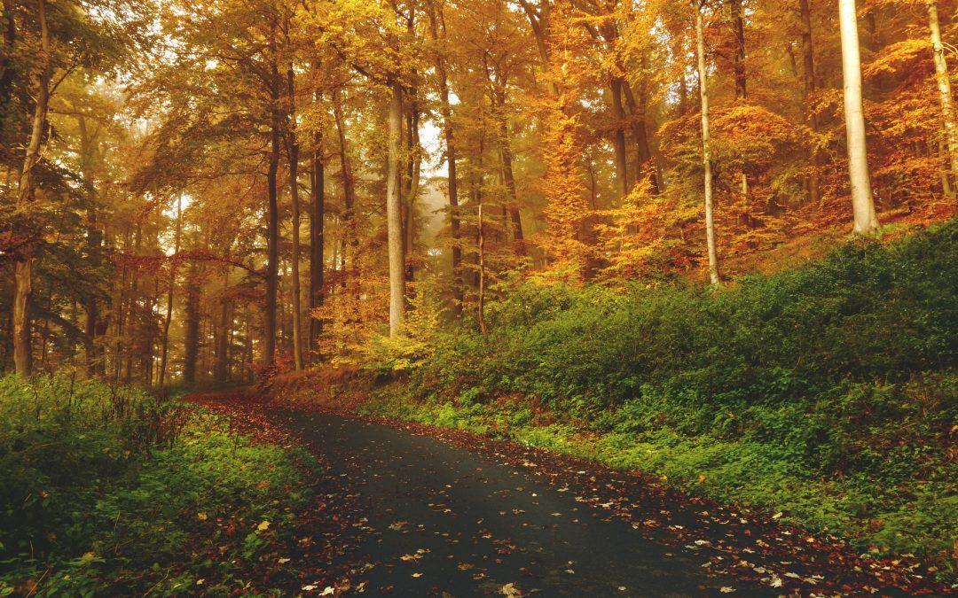 Je roeping ontdekken aan de hand van de seizoenen
